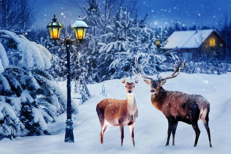 Group of red deer in a snowy forest on Christmas night against the background of the village and the lantern. New Year card. royalty free stock photos