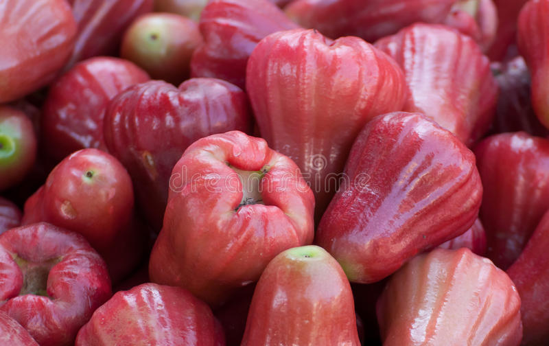 Group of Red rose apple royalty free stock photos