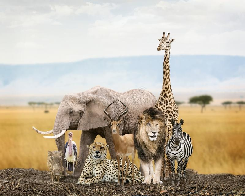 Group of Safari Animal Friends. Large group of African safari wildlife animals together in Kenya grasslands royalty free stock image