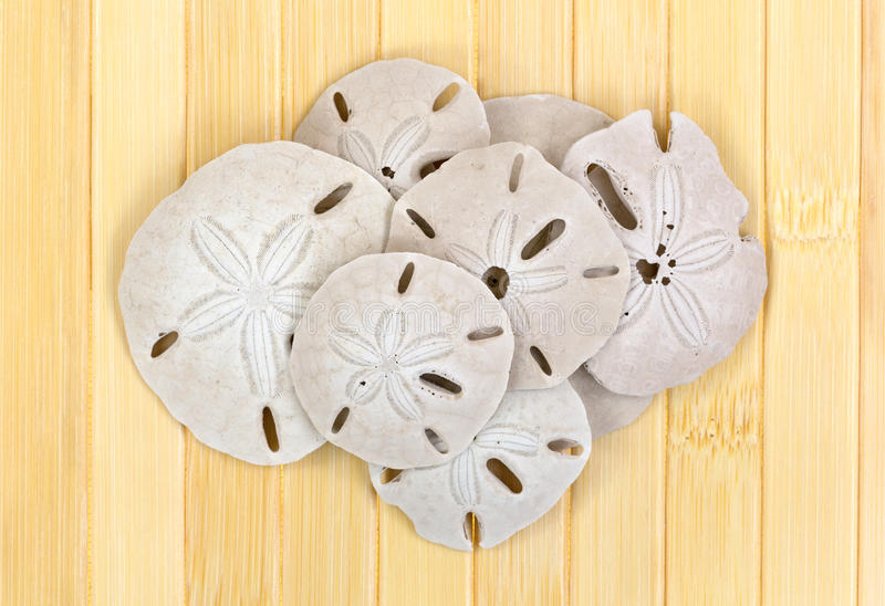 Group of sand dollars on wood slat surface. A group of old sand dollars atop a wood slat background stock photo