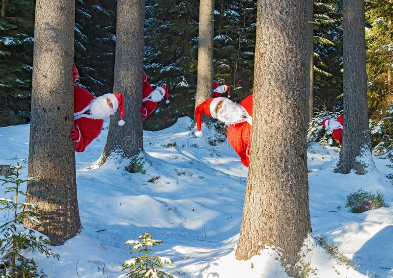 Funny team of Santa peeks out of the winter forest. Group of Santa Claus look behind snowy trees. Funny team of Santa peeks out of the winter forest. Surprise royalty free stock images