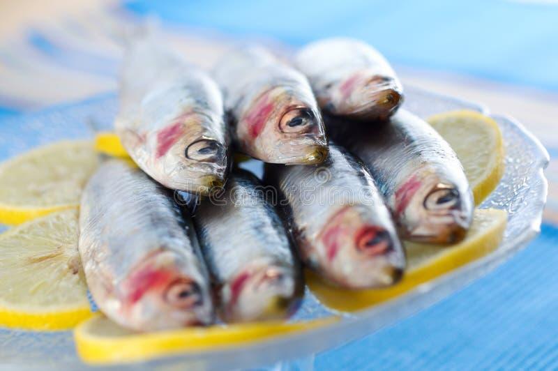 Group of sardines on lemon slices royalty free stock photos