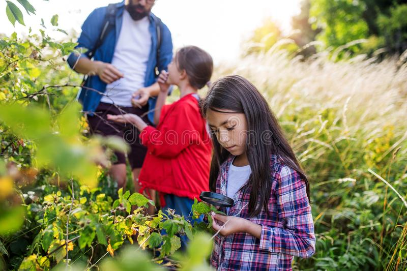 Group of school children with teacher on field trip in nature, learning science. royalty free stock photography