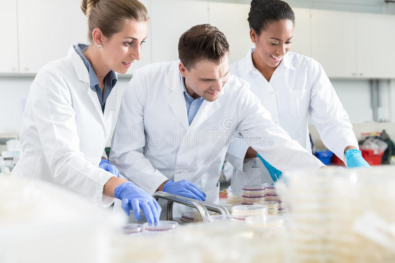 Group of scientists in food laboratory with samples in petri dis. Hes royalty free stock image