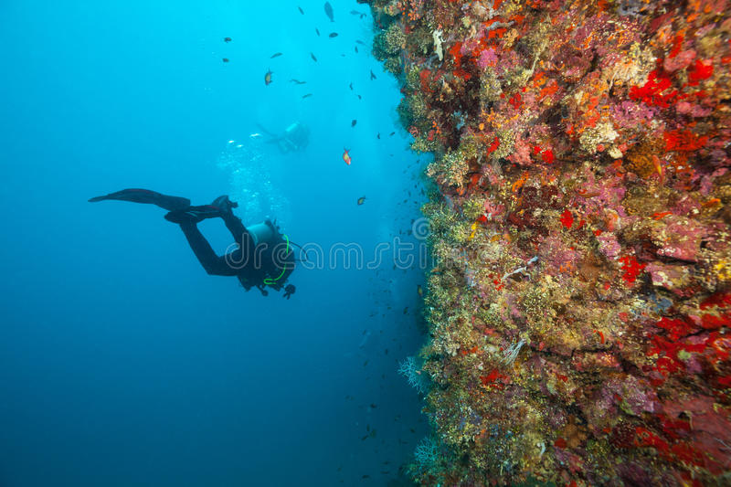 Group of scuba divers exploring coral reef royalty free stock photos