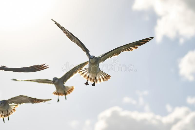A group of sea birds fly to the camera, close-up against the sky stock images