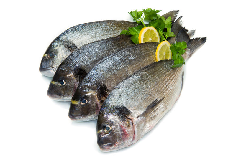 Group of sea bream. With lemon and parsley isolated on white royalty free stock photo
