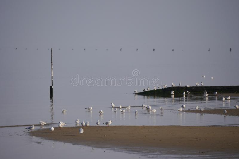 A group of seagulls at the beach of sahlenburg cuxhaven germany royalty free stock images