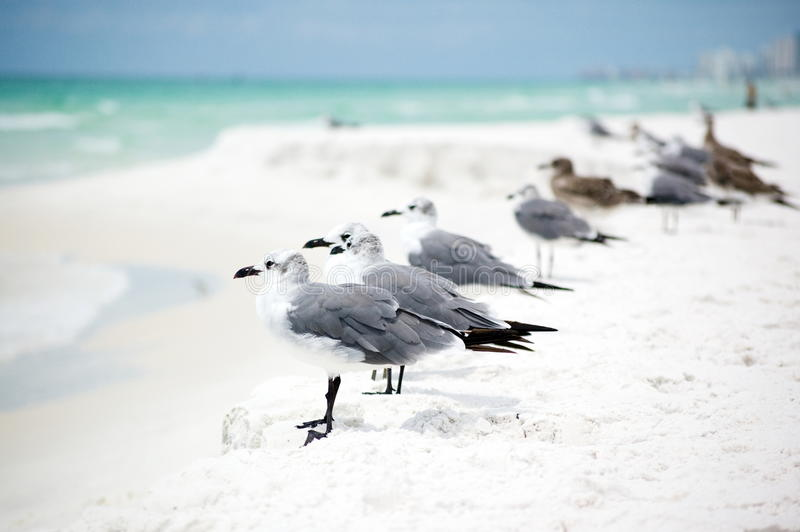 Group of seagulls standing in a row on the seashor