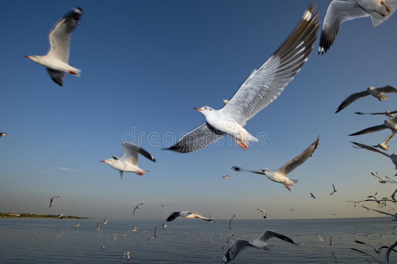 A group of segulls turning around stock images