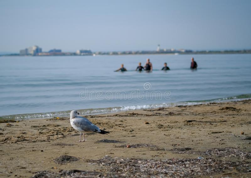 A group of seniors or elderly people walk along the beach into sea stock image