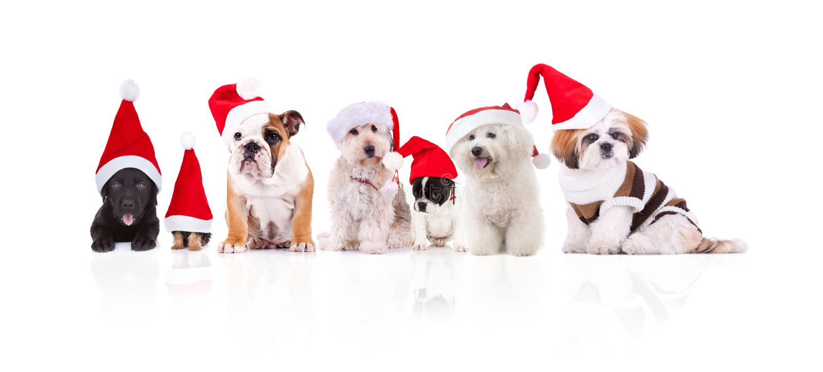 Group of seven adorable santa dogs of different breeds stock image