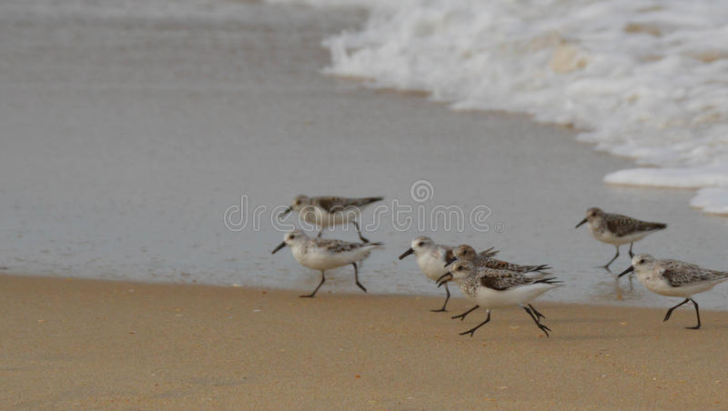 Group of Shore Birds royalty free stock image