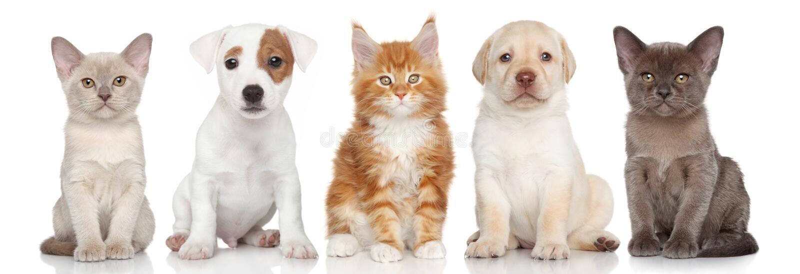 Group of small kitten and puppies royalty free stock images