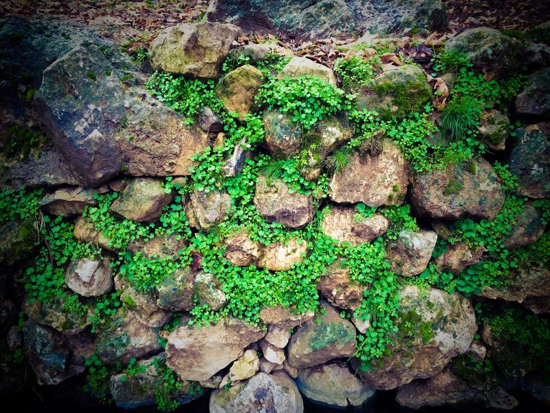 Stacked Stone with grass Texture. A group of stacked stones with green grasses royalty free stock images