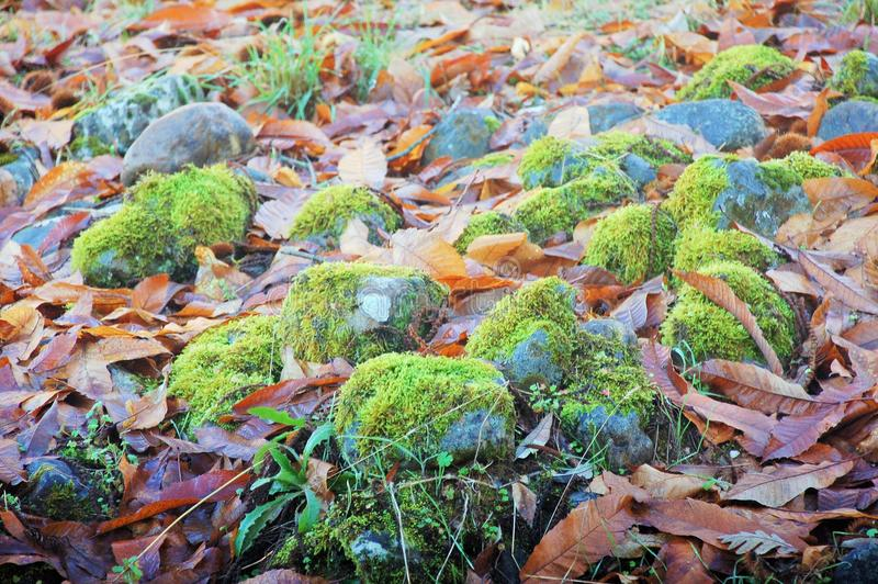 A group of stones with moss between leaves and grass stock photo