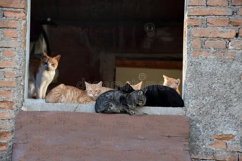Cats living in ghost village of Pentedattilo royalty free stock photos