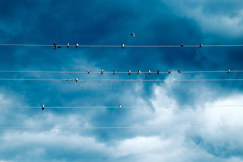 Group of swallows sitting on wires. Over blue sky with clouds royalty free stock photo