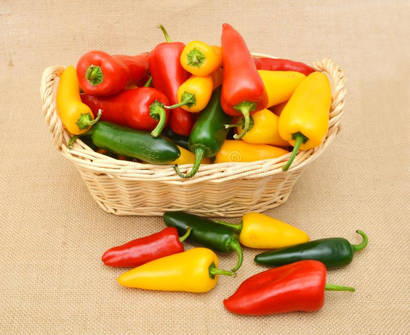 Group Sweet Mini Peppers on white background royalty free stock images