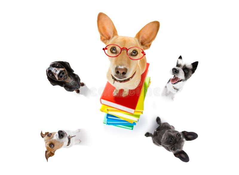 Smart dog and books stock photos