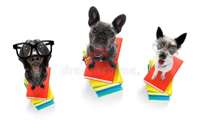 Smart dog and books stock photography
