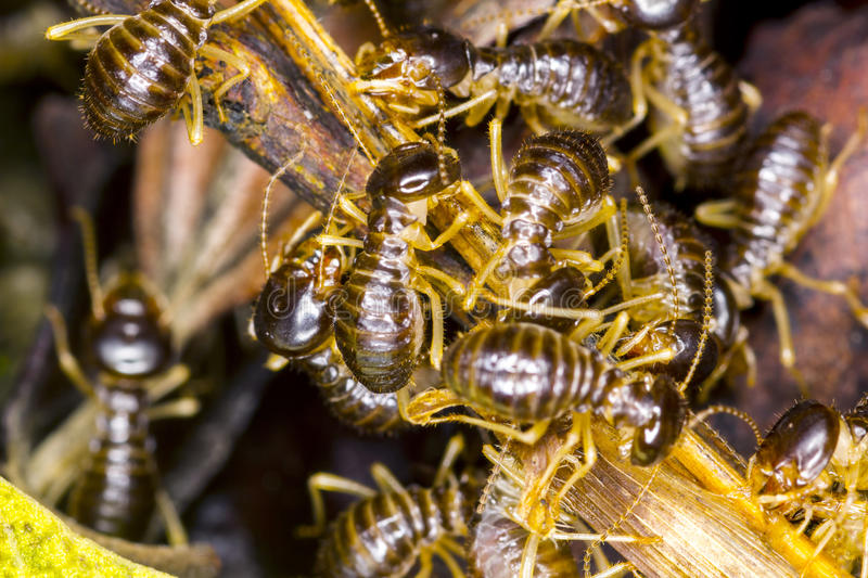 Group of termite royalty free stock photos