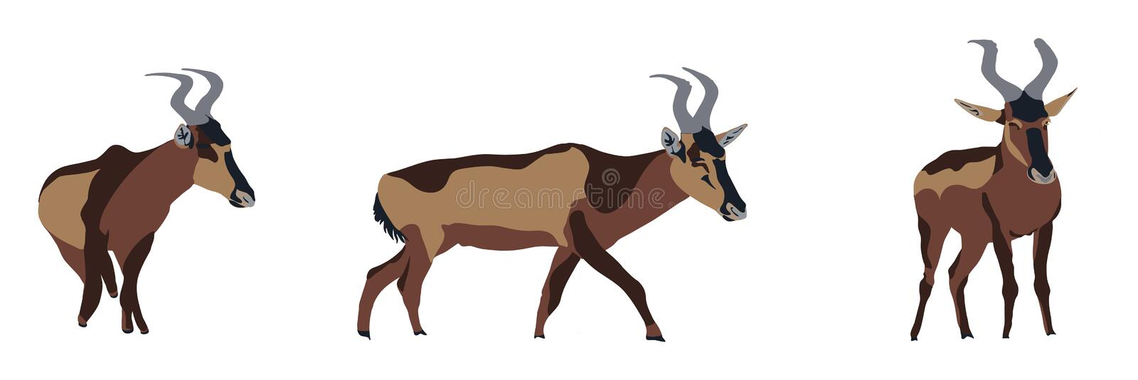 Group of three red hartebeest in different posings stock illustration