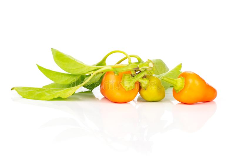 Hot red orange chili pepper isolated on white. Group of three whole hot red orange chili pepper with fresh green leaves isolated on white background stock image