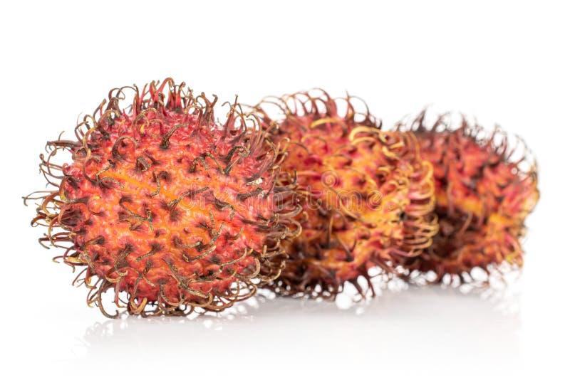 Fresh red rambutan isolated on white. Group of three whole unpeeled fresh red rambutan isolated on white background stock image