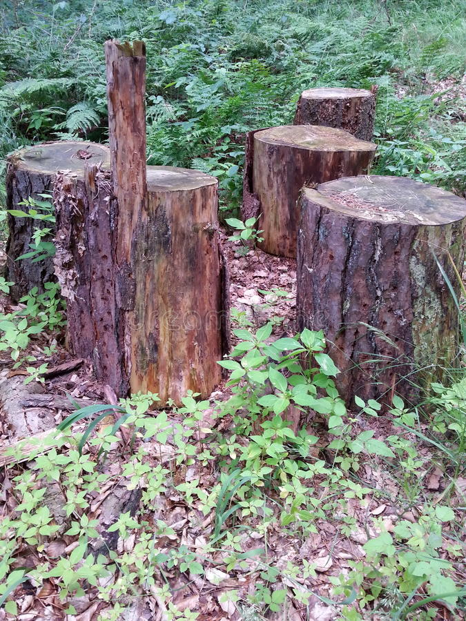 Group of tree logs as seats stock photo