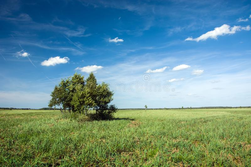 Group of trees on a large meadow and white clouds on the blue sky. Group of trees on a large green meadow and white clouds on the blue sky stock photography