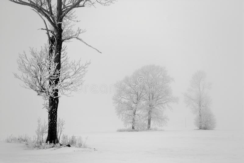 Group trees near road, foggy winter day stock photography