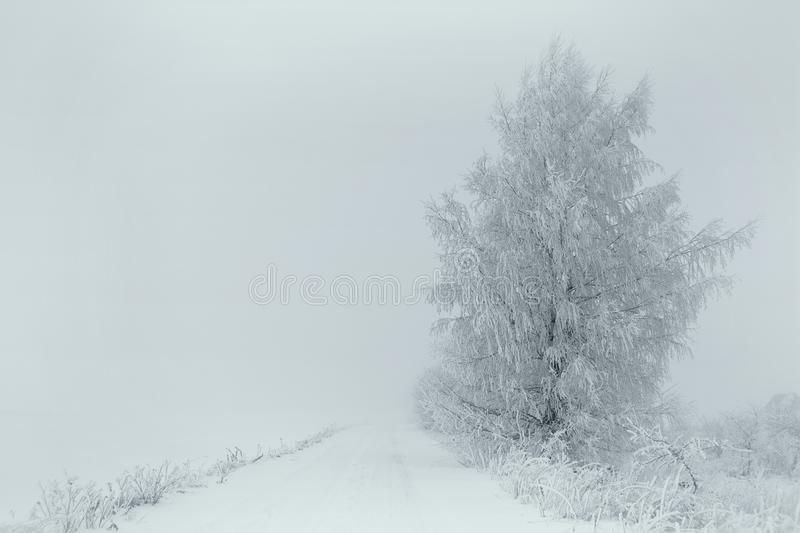 Group trees near road foggy winter day stock image