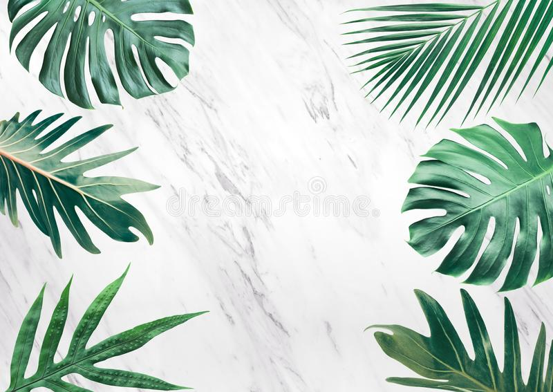 Group of tropical leaves on marble background.Copy space.Nature royalty free stock image