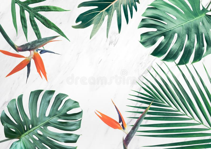 Group of tropical leaves on marble background.Copy space.Nature royalty free illustration
