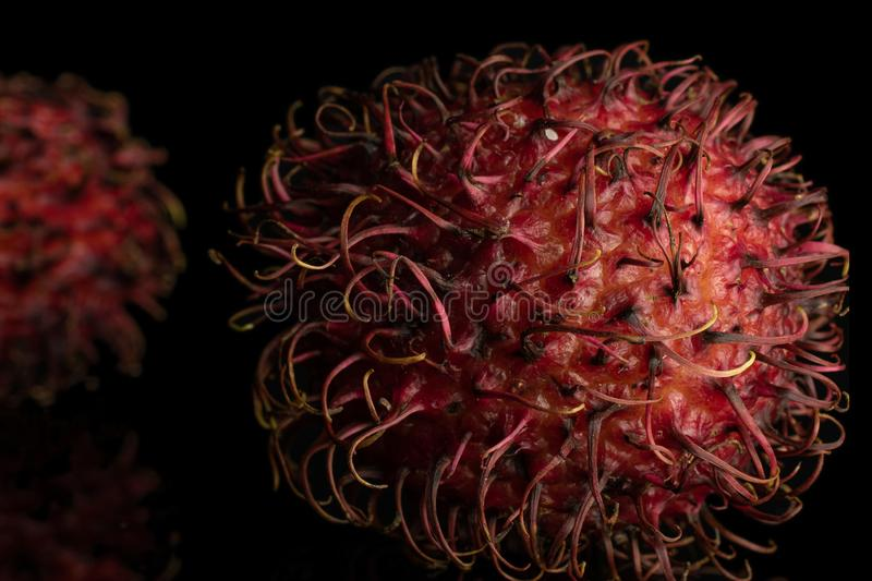 Fresh red rambutan isolated on black glass. Group of two whole fresh red rambutan closeup isolated on black glass royalty free stock images