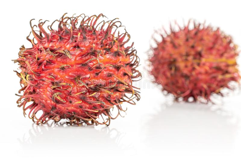 Fresh red rambutan isolated on white. Group of two whole fresh red rambutan isolated on white background stock photos