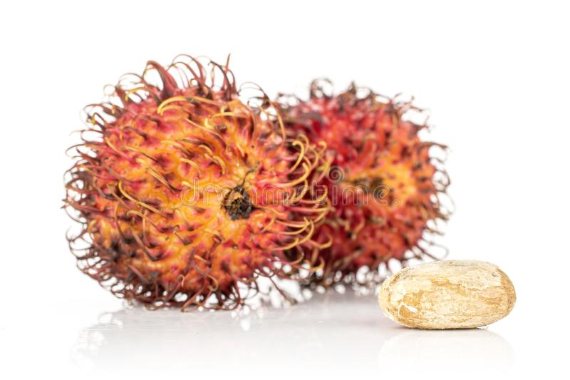 Fresh red rambutan isolated on white. Group of two whole one piece of unpeeled fresh red rambutan isolated on white background royalty free stock image
