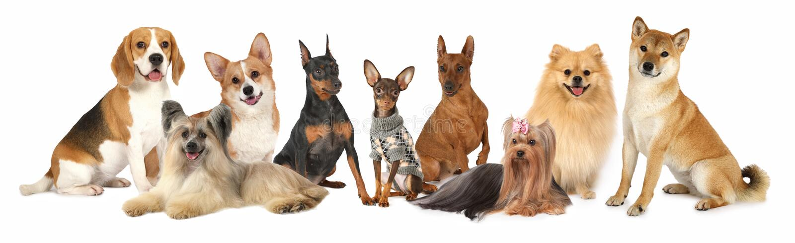 Group Of Different Large Dog Breeds Stock Photo Image Of