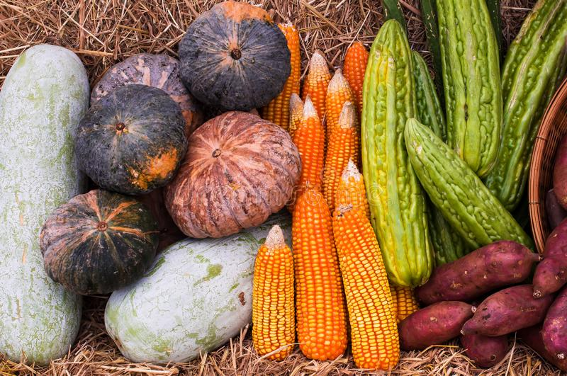 Group of vegetables and fruits from organic farm, corn cob, pumpkin, winter melon, sweet potato and bitter gourd stock image
