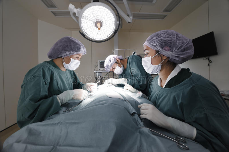 Group of veterinarian surgery in operation room stock photo