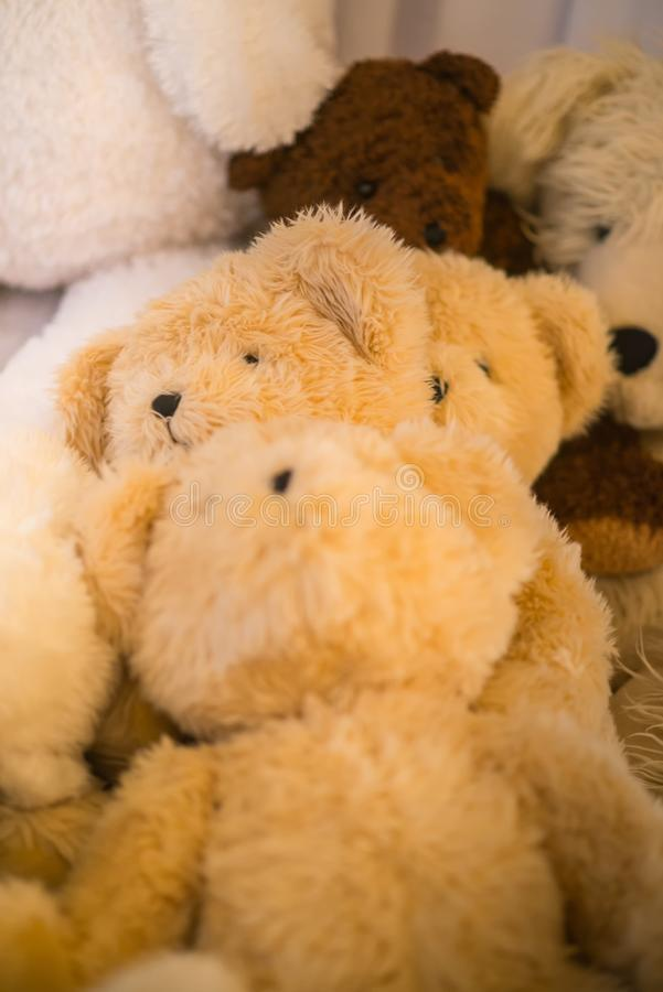 Group teddy bears lay indoor next to each other under the warm lights royalty free stock photography
