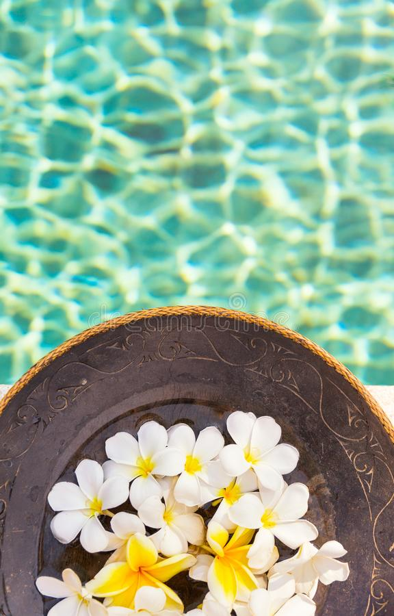 Group of white and yellow frangipani flowers on brown wooden plate by the swimming pool side , vertical composition stock photo