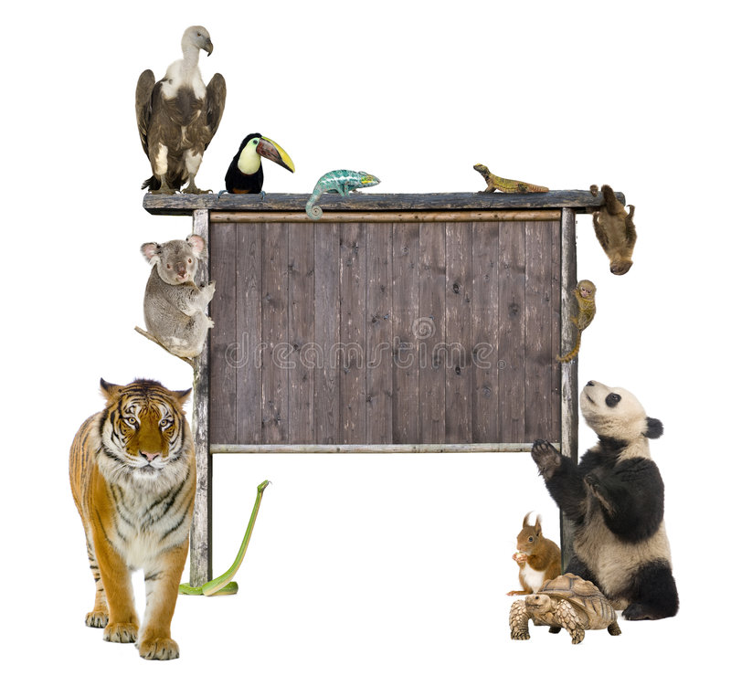 Group of wild animals around a blank wooden sign stock image
