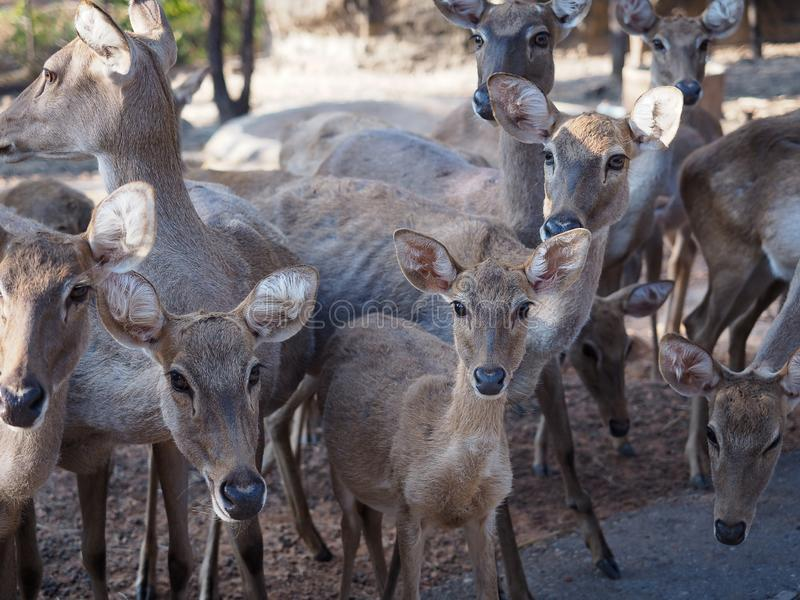Group of young deers. royalty free stock photography