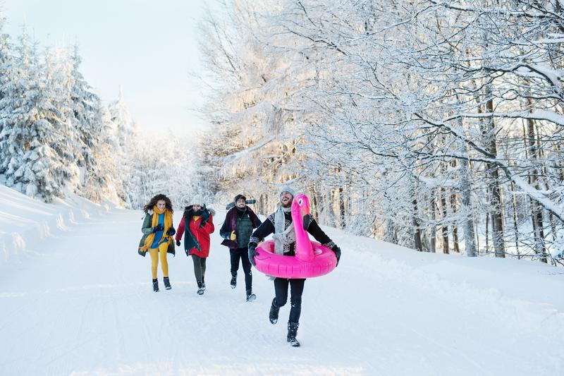 A group of young friends on a walk outdoors in snow in winter forest. royalty free stock photography