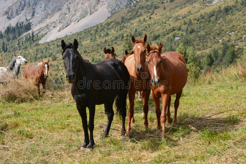 Group of young horses on the pasture. stock photo