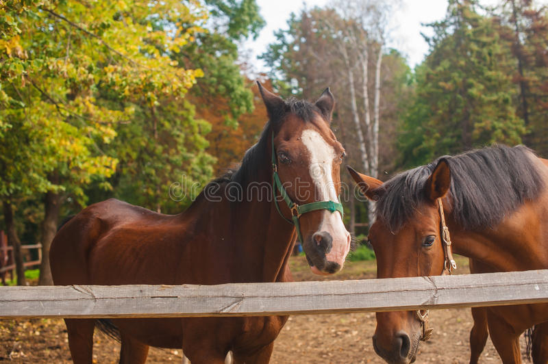 Group of young horses on the pasture royalty free stock image