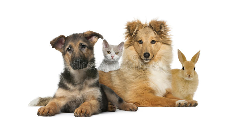 Group of young pets royalty free stock photo
