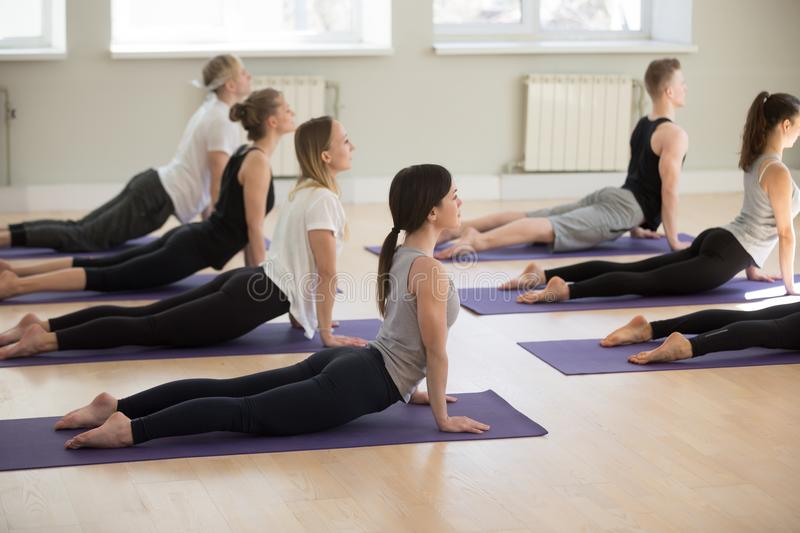 Group of young sporty people in upward facing dog exercise. Group of young sporty people practicing yoga lesson, doing upward facing dog exercise, Urdhva mukha royalty free stock images